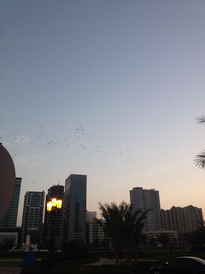 جميل منظر الطيور http://t.co/HyLNJXA3