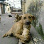Salvar a un animal no cambiará el mundo  pero si cambiará el mundo de ese Animal.  #Adopta http://t.co/0h3nPqpYJ1