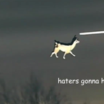 The 18 Most Historically Important Moments From The Great Llama Chase of 2015 http://t.co/9sOZO3Vq9B http://t.co/GlxhZnWJRu