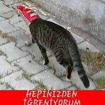 An itibariyle elenmeyi yediremeyen Ayşenur #BuTarzBenim ahhahahahhahahahahha ???????????????? http://t.co/9kdz8ZXkGV
