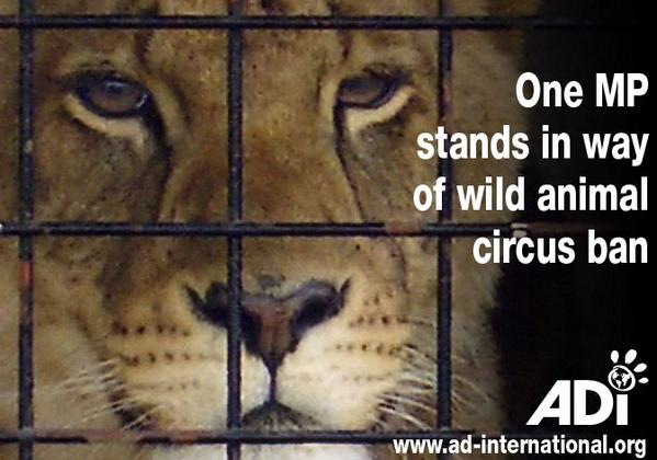 British wild animal #circusban bill blocked again by Conservative MP Andrew Rosindell http://t.co/aHxU571AfE http://t.co/ZeuMtuQLOK