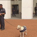 RT @AndrewBGreene: Parliaments beefed up security is today showing a softer, cuter side http://t.co/KOFiBkSpmH