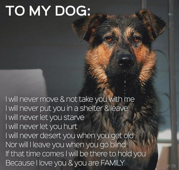 Emmanuelle Vaugier (@evaugier): Love this!! I'm sure all you animal lovers agree....and if you don't, you shouldn't own a pet! http://t.co/7B3LtpAczR