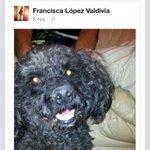 RT @NATIP_MC: @DonDateador @vinadelmar RT RT POODLE NEGRO PERDIDO EN JARDIN DEL MAR! @botaspuesta porfa ayudenme con un RT http://t.co/K1t789eZu8