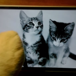 How the world's most a-mew-sing #Lumia cat video was made! http://t.co/25Lv9knKpS http://t.co/ztlqIfYKzn