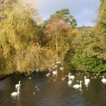 #Autumn has definitely arrived now so its a great time to explore the changing colour of the seasons @Kearsneyparks http://t.co/yDYHlOxxtL