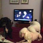 Se ha sumado toda la familia canina a ver a #RickyMartin http://t.co/n8Naarhop3