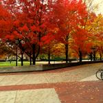Crisp, cool, calm #UMichFall morning to you all! RT @Im_Connor: @umich looking lovely in the fall #PureMichigan http://t.co/zEzP64UhIR