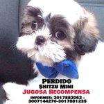 Recompensa para quien ayude a encontrar a este perrito perdido en Los Cortijos, @Valledupar. @CacicaStereo http://t.co/EKdxYOs2Yg