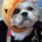 If you have an anxious pooch, these tips should help them get through the Halloween period http://t.co/1irNiGK1N8 http://t.co/daMwY4rjUQ