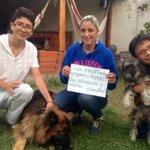 Desde el #GADTumbaco defendemos a los animales. #LobaEcuador @solbuendia @marcelaguinaga @GabrielaEsPais @MashiRafael http://t.co/NJOYecl3Ao