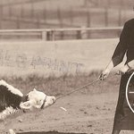 #tbt to 1937. The first calf in the country was conceived through artifical insemination born at #UMN. http://t.co/fHlaCseoXh