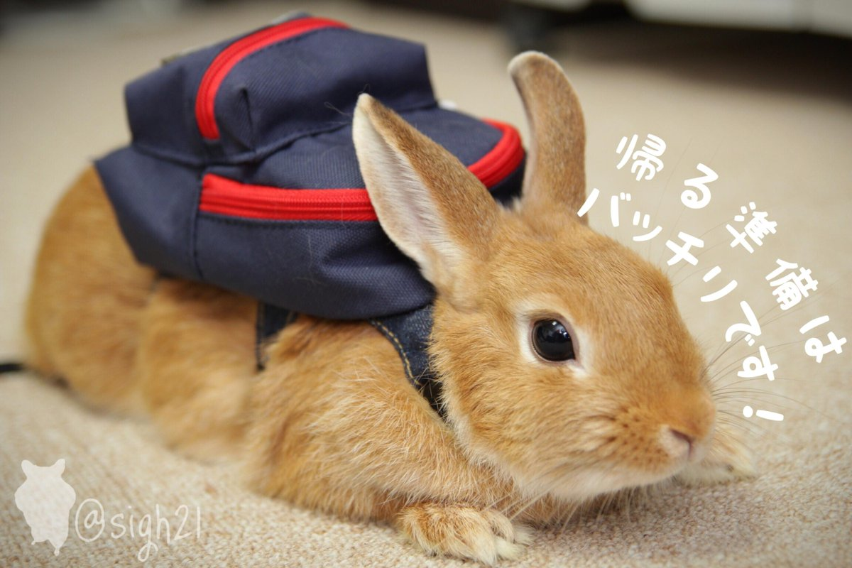 帰りたい #全日本もう帰りたい協会 http://t.co/R1tQ4fuHU3