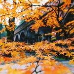 いいとこフォトグラファーより秋の便り。今朝の南禅寺ですhttp://t.co/Vi5igcfwlK #kyoto #紅葉 http://t.co/5qF8ijUqGE
