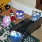 #elfonashelf hanging out with the gophers, adding two more blue gophers to the clan, learning #golang this morning. http://t.co/dpWPbfaYlO
