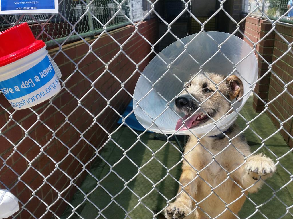 Dogs Needing Homes Perth