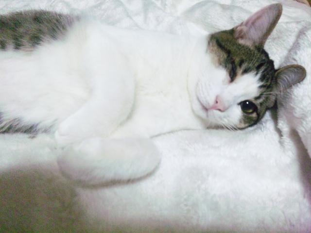 【家族募集】猫風邪が原因で右目が失明している7〜8ヶ月の男の子。3種混合ワクチン、ウイルス検査済み。一部閲覧注意→http://t.co/uzjz8iLntV #猫部 http://t.co/XybudbcPAW