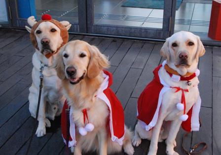 【日本盲導犬協会より】本日『富士ハーネス』にてキャンドルナイト開催! 皆様お誘い合わせの上、ぜひ遊びにいらして下さい♪ 皆様のお越しをPR犬とお待ちしております。詳しくはHPへ。http://t.co/720qYDvRQv http://t.co/IsFKX3Oj66