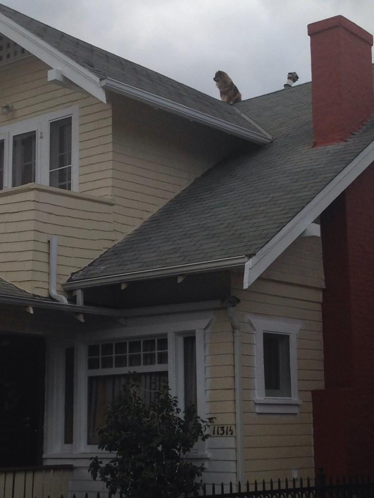saw this dog on a roof. felt like a shrine. http://t.co/jTku7Xp3ZT