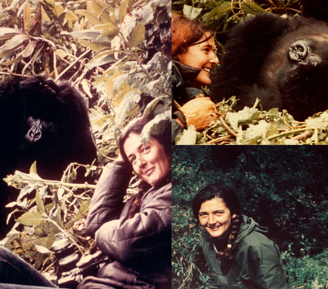 On Dec. 26, 1985, Dr. Dian Fossey was murdered. Today, we honor & remember the achievements of our founder. http://t.co/7bU99Uc1ul