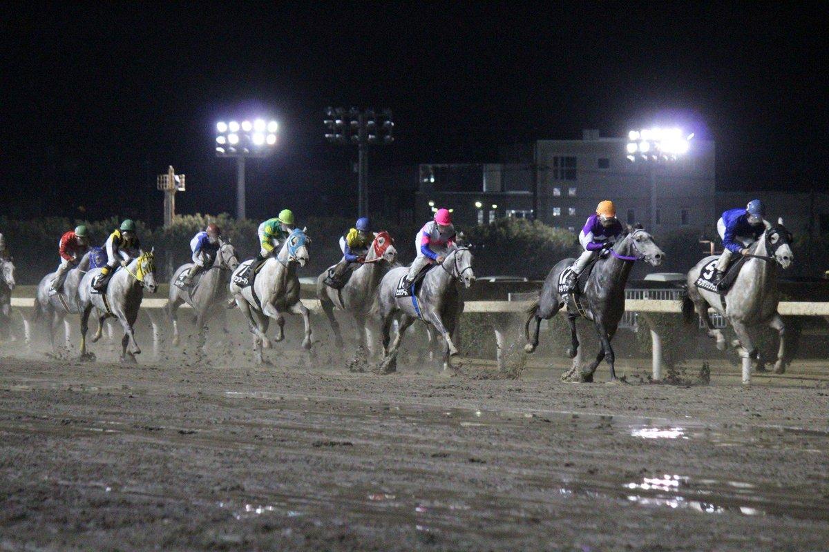 今日は今年の川崎競馬開催の最終日。最終レースには白毛芦毛馬限定競走の「36th ホワイトクリスマス賞」が行われます!連覇を狙うトキノゲッコウ、昨年2着のシルクスノーマン、名牝・ナターレの弟ストロングジーンらが出走です! http://t.co/agBIRgpFrA