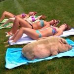 #terepin  Como llegan tus amigas al verano y como llegas vos. http://t.co/0oTBN8FG0H