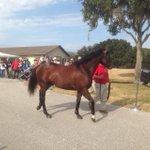 Brethren At the Pleasant Acres #StallionShow #Ocala http://t.co/CW87f3A57D
