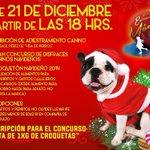 ¡ Hoy gran concurso canino navideño! ¿Dónde? en la #EstaciónMágica2014, a las 18 Hrs., trae a tu mascota y participa http://t.co/HMMszYeuiA