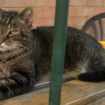 MISSING: Have you seen Barney? 13-year-old male. Lost 7 days. Lawnswood Avenue, Shirley B90. Microchipped. Please RT. http://t.co/Xl8qW97Z6c