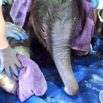 .During her first ever wellness check-up. #okczoobabyelephant 💖332lbs. http://t.co/L0MOGZO6Xv