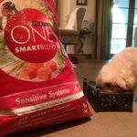 RT @PurinaONEdog: Maui wants to start 2015 healthy. The 28-Day Challenge is her New Year's resolution! #ONEdifference  @ashleytisdale http:…
