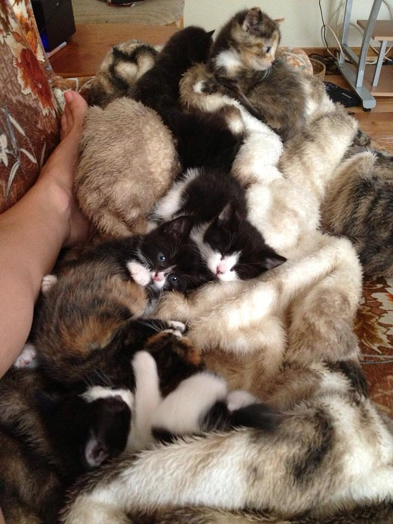 Cuddly blanket of kittens http://t.co/PiVc0gLcF8