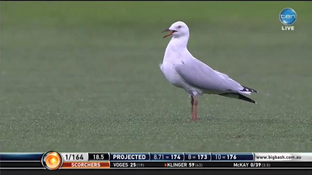 Jury is out on who was more popular tonight, Steven Sea-gull or @NiallOfficial... #BBL04 http://t.co/Fr2pZiVQMA