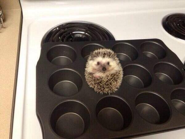 For anyone who is feeling a bit sad today, here's a hedgehog in a baking tray. http://t.co/4OEK7gTrq2