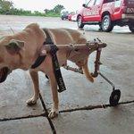 Cachorrinha ganha cadeira de rodas feita por bombeiro http://t.co/7opQIqKj2g #G1 http://t.co/TC8hP8kCAS