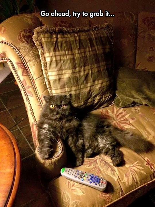 Cats suck. http://t.co/zx7KZ9LcHd
