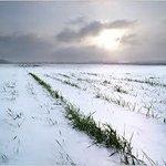 """@_media73_: Озимые зерновые культуры спасаются под тёплой снежной шубой  http://t.co/IIlGlYszbn http://t.co/BgXPWmCtBH"""