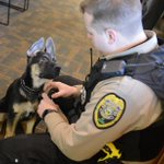 Welcome Chase! The newest, and furriest, member of the K-9 unit! http://t.co/Wadc35KUVp #rangerk9 http://t.co/ABTinC0v4t