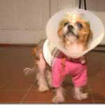 Dog found in dumpster gets second chance at life: http://t.co/ZSmlbWcB7t http://t.co/vsC47w3T4B