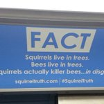 Squirrely ads scuttle aboard the 'L' (from our comrades @redeyechicago) #SquirrelTruth http://t.co/LFB8gT2GEf http://t.co/nfH1Zq3Qeo