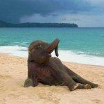 Arrêtez tout et regardez ce bébé elephant qui découvre la plage pour la première fois 🐘🌊 http://t.co/owq8f5IPR3