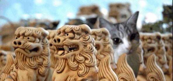 シーサーwith猫\(^o^)/  #猫三昧 #沖縄好きはRT #シーサー好きはRT #猫好きはRT  シーサー好きはあんまりいないかΣ(゚д゚lll)笑 http://t.co/goEmvYgUK4
