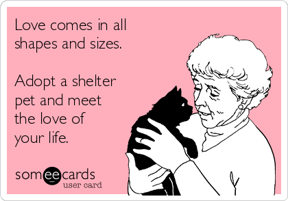 Still need a valentine? Adopt a homeless pet and bring unconditional love into every day of your year! http://t.co/8paLPWx4o9