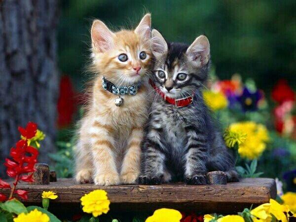 """Оригинал схемы вышивки  """"котятки """" ."""