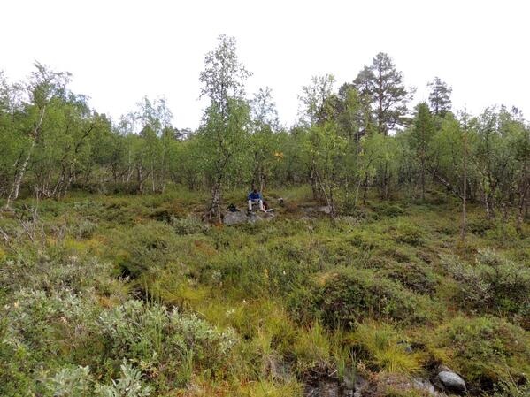 A boggy survey site today with clouds of mosquitoes #lapland http://t.co/ilRhrbJcOJ