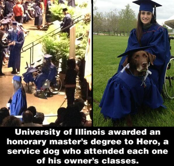 This dog was awarded an honorary master's degree. http://t.co/th0XZzqiTk