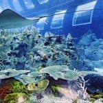"""RT""""@Latiief_A: RT @uni2uni_: Pemandangan dari dalam aquarium. Jendela2 itu adalah kamar hotel... http://t.co/hPgMlzjFI3 #RIPFarhatAbbas"""""""