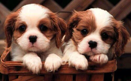 RT @estez227: I'm only tweeting pictures of puppies for the rest of the day http://t.co/IiqEiMD38X