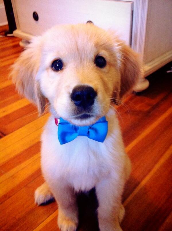 Puppy, gettin' fancy http://t.co/CM60TnE2BL