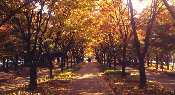 @Kor_Visitkorea 대전 걷고 싶은 길 12선 중 하나인 '시청앞 가로수길'이에요. 도심속에서 가을의 정취를 제대로 맛볼 수 있는 곳이죠. 대한민국 구석구석에 소개할만 하죠? http://t.co/pKUhMWQ6lt